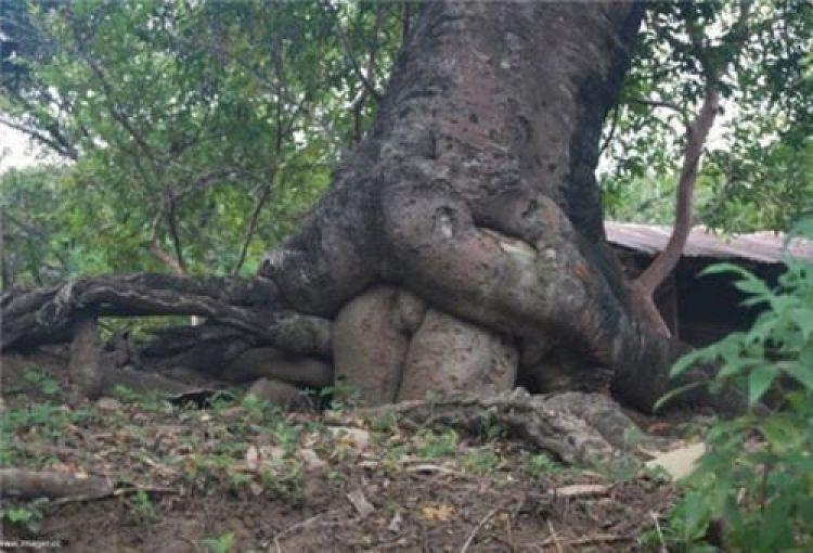 Природа и секс