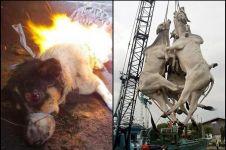 11 Foto bukti kekejaman manusia terhadap binatang, kok tega ya!
