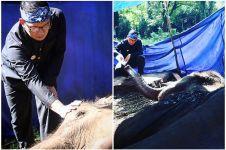 Ridwan Kamil ungkap kondisi Kebun Binatang Bandung, bikin miris!