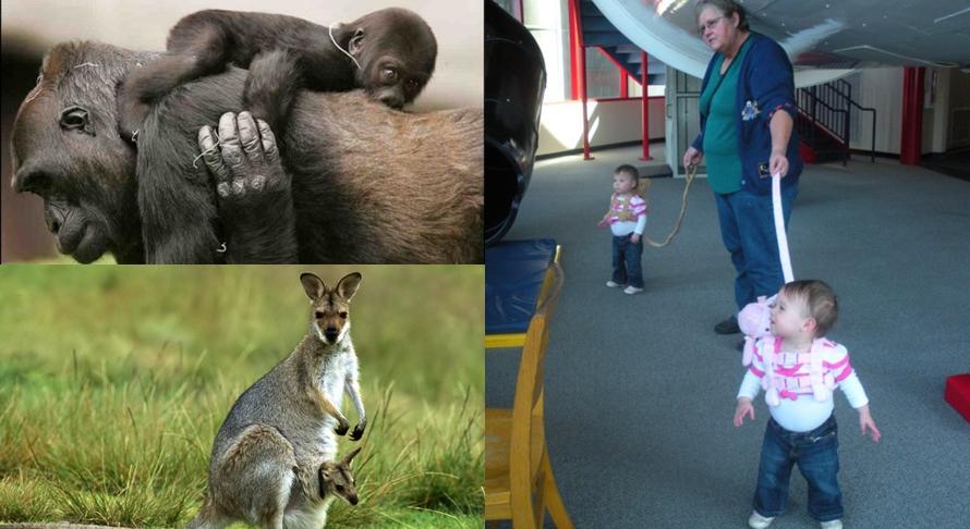 9 Foto beda cara hewan dan manusia mengasuh anak-anaknya