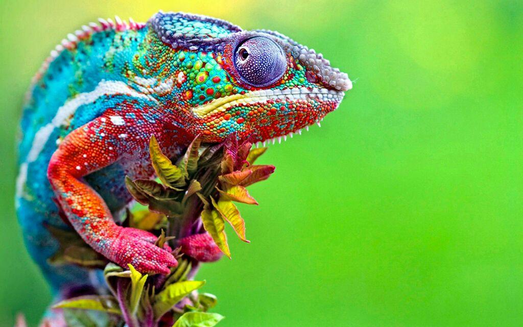 Nggak cuma rainbow cake, 10 hewan ini juga berwarna bak pelangi, lho!