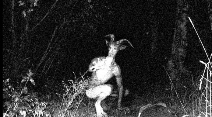 10 Makhluk misterius ini pernah gegerkan dunia, tak jelas asalnya!