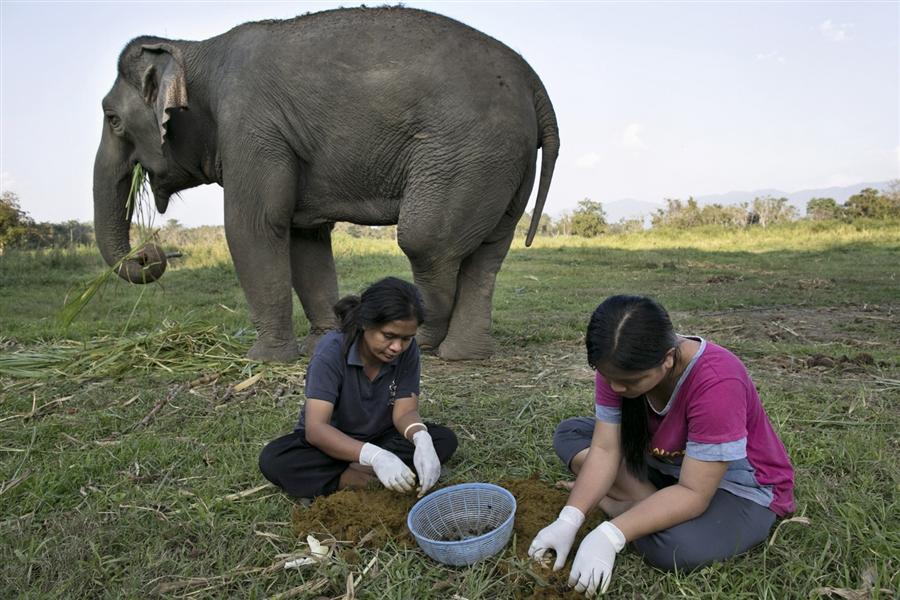 Kuliner - 10 Fakta tak terduga tentang kopi gajah, harganya Rp 14,9 juta perkilogram © 2016 brilio.net