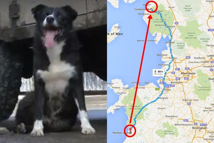 Pero, kisah anjing tempuh 3.000 km cuma untuk kembali ke pemiliknya