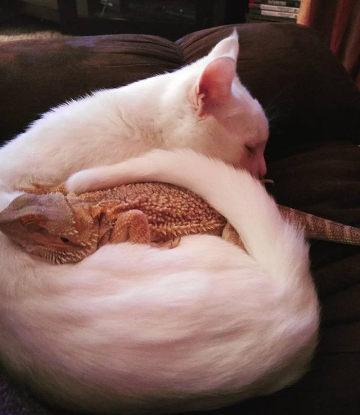 kucing bunglon © 2016 brilio.net