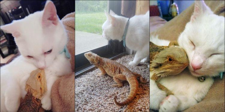 Pertemanan kucing dan bunglon ini bikin iri dan kangen sahabatmu deh!