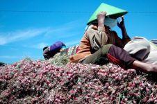 Mirisnya nasib petani ini, jual 1 ton bawang merah cuma untung Rp 200!