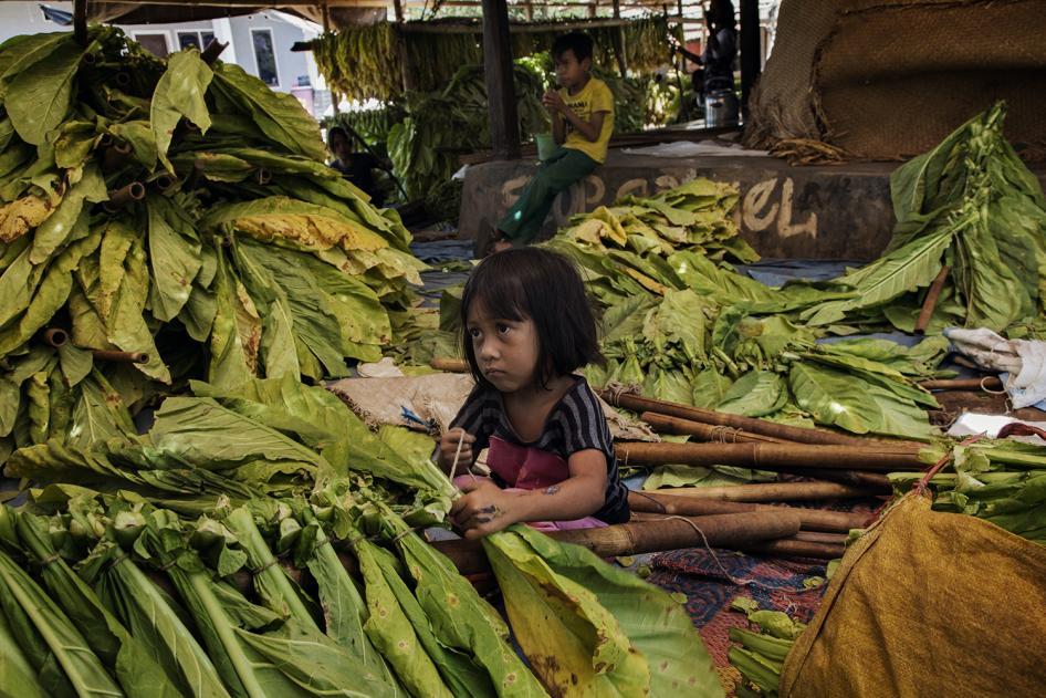 Pekerja anak di perkebunan tembakau banyak terpapar nikotin