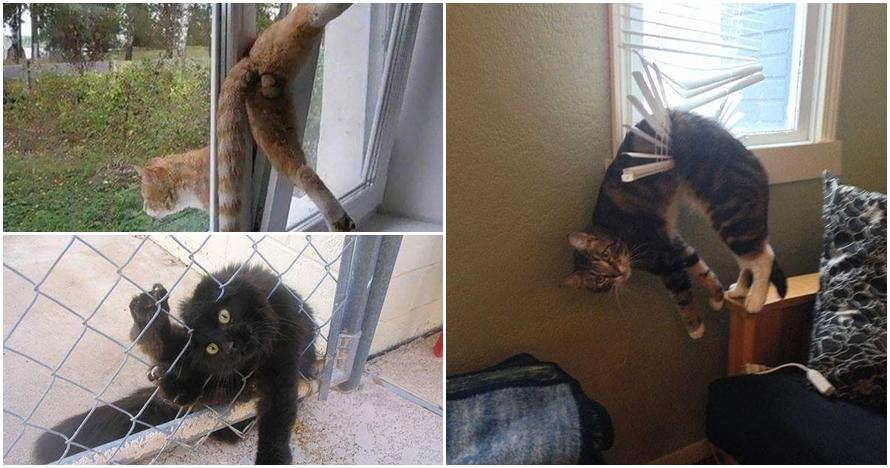 15 Foto kucing ketiban sial ini bikin kamu pengen ketawa tapi kasihan