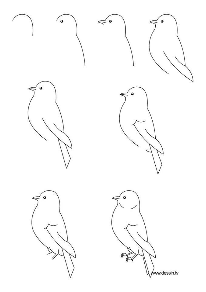 15 cara mudah menggambar hewan ini bikin gemar melukis for Cool drawing sites