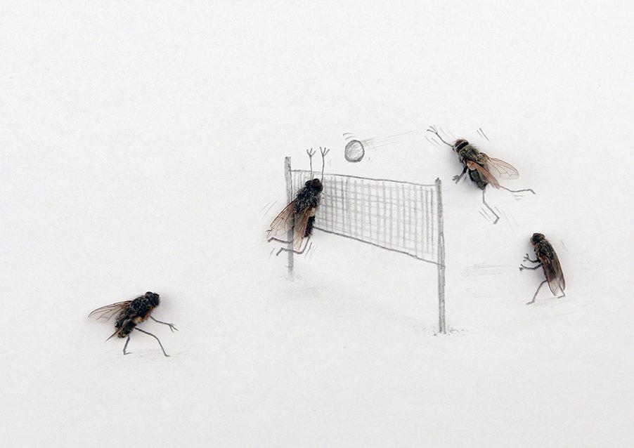 Картинки прикольной мухи