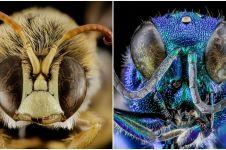 20 Foto kepala serangga ini bikin berdecak kagum, bukan editan lho!