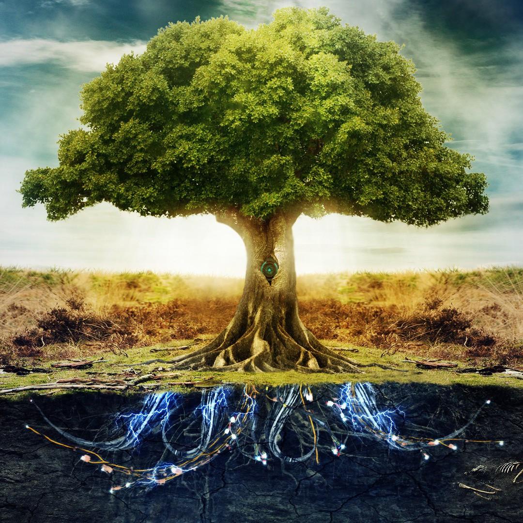 Pohon elektrik, temuan mahasiswa Indonesia untuk atasi polusi udara