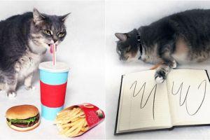 10 Pose kucing ala stiker Facebook, lucu banget ya!