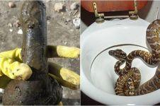 10 Benda aneh yang ditemukan di toilet ini bikin melongo