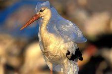 20 Foto hewan tersiksa ini ingatkan kita agar jangan asal buang sampah