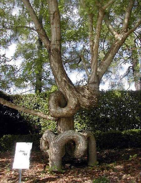 pohon kok bisa ya © 2016 brilio.net