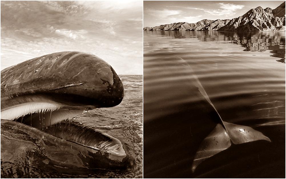 Pria ini habiskan 25 tahun hidupnya untuk memotret paus & lumba-lumba