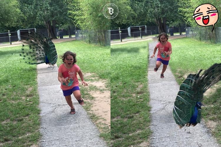 16 Foto editan anak kecil dikejar burung merak ini kocak bikin ngakak!
