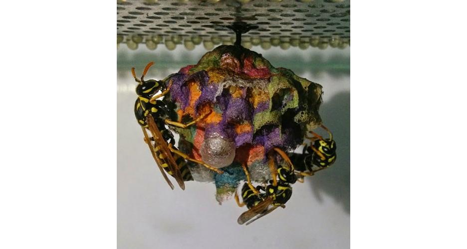 7 Foto indahnya rumah 'pelangi' tawon, jangan mendekat awas disengat!