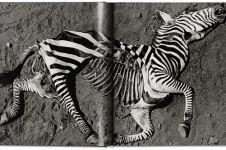 12 Foto menakjubkan alam liar Afrika era 1960an, langka nih!