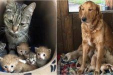 17 Foto perjuangan hewan mengasuh bayinya ini bikin haru