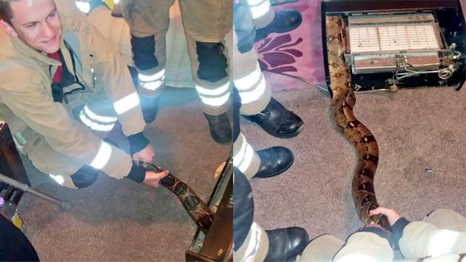 Petugas pemadam kebakaran ini selamatkan ular boa sepanjang 3 meter