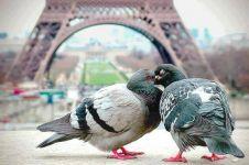 12 Foto sepasang burung ini romantis banget, jomblo dilarang iri!