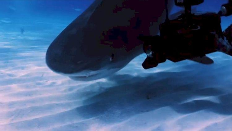 12 Foto ini bukti hiu predator terkuat dan menyeramkan di laut!