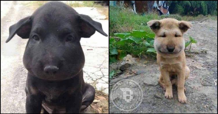 Akibat terlalu kepo muka dua ekor anjing ini jadi aneh, kenapa ya?