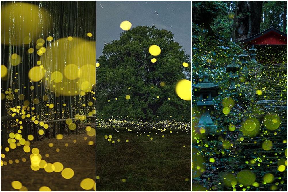 10 Foto keindahan taman kunang-kunang, bikin mata enggan berkedip!