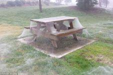 Ngeri, taman ini diselimuti jaring laba-laba, berani ke sana?