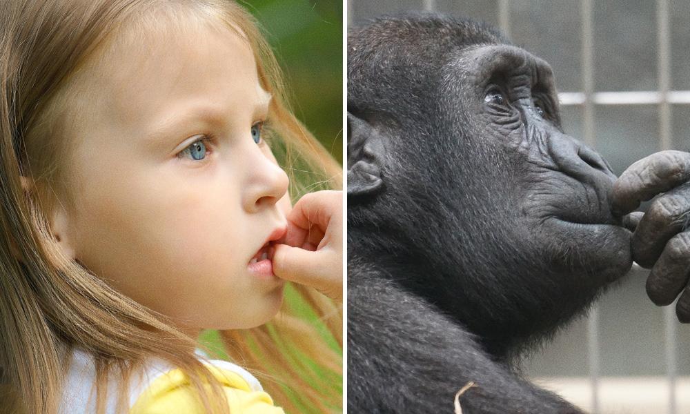 15 Foto ini bukti hewan juga punya ekspresi wajah seperti anak-anak!