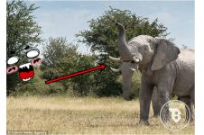 Terlihat punya dua belalai, gajah liar ini bikin heboh netizen