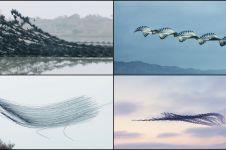 11 Foto formasi kelompok burung terbang ini bikin kagum, gimana bisa?