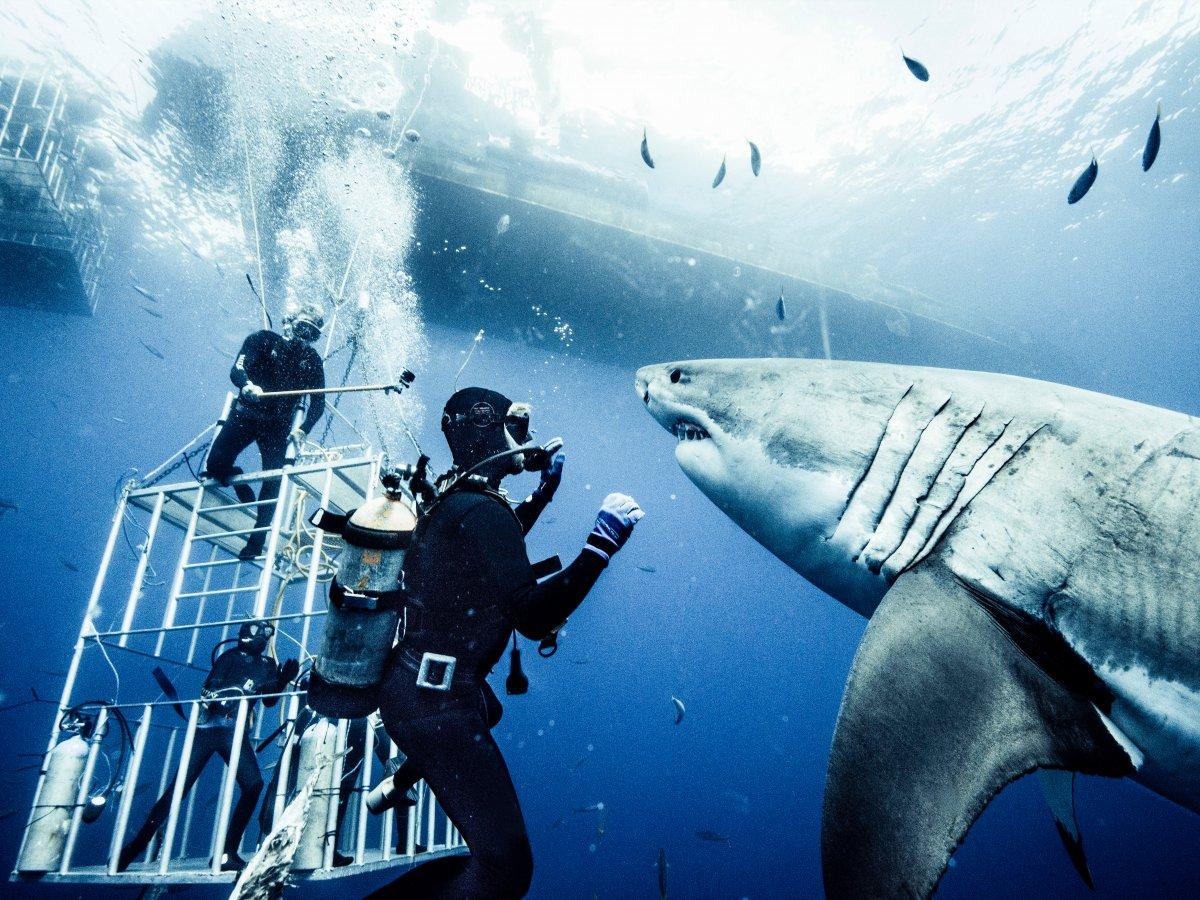Fotografer ini rela berenang 10 tahun dengan hiu demi foto-foto ini!