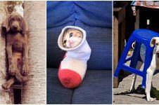 18 Foto hewan ketiban sial ini kasihan tapi bikin pengen ketawa!