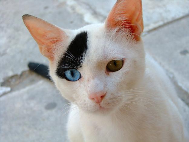 kucing kelainan genetik mata © 2016 brilio.net
