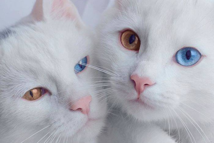 Alami kelainan genetik di mata, 17 kucing ini malah makin lucu