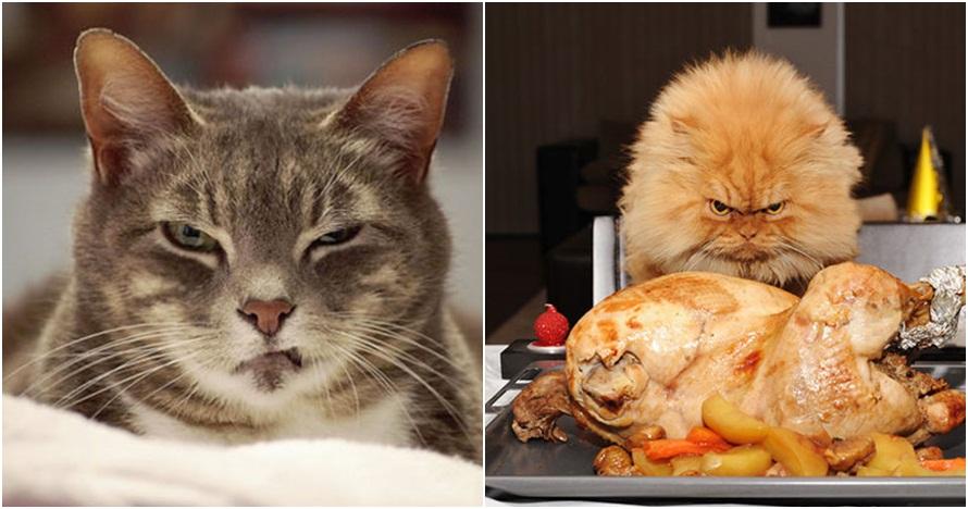 20 Foto kocak ekspresi kucing kalau lagi marah dan ngambek, serem ih..