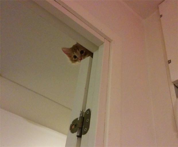 20 Foto Kocak Ekspresi Kucing Kalau Lagi Marah Dan Ngambek