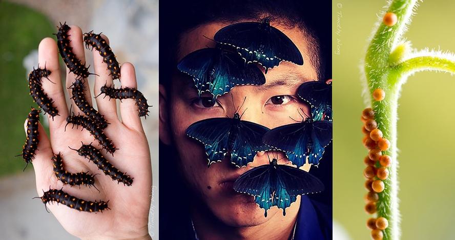 Ahli sains ini selamatkan kupu-kupu yang nyaris punah, keren