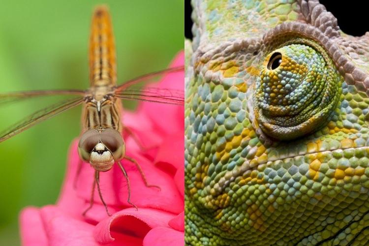 15 Foto close-up bola mata hewan ini tak cuma unik tapi juga keren