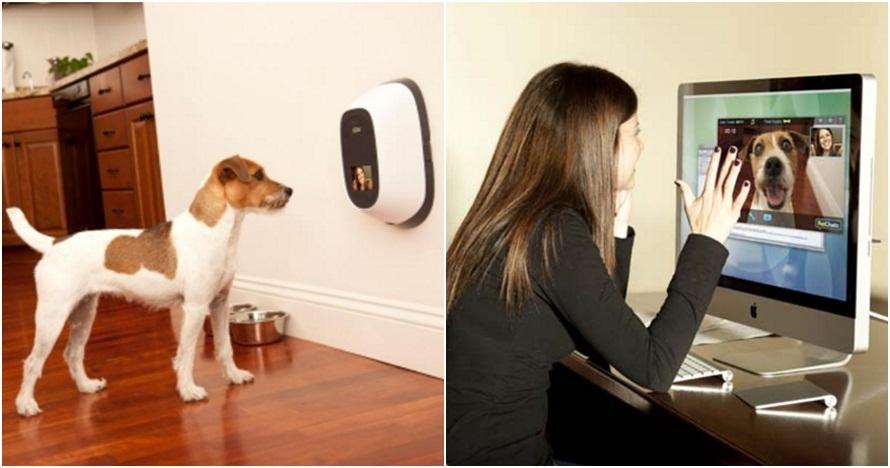 Gadget ini bisa buat ngobrol dengan hewan peliharaan saat jauh lho