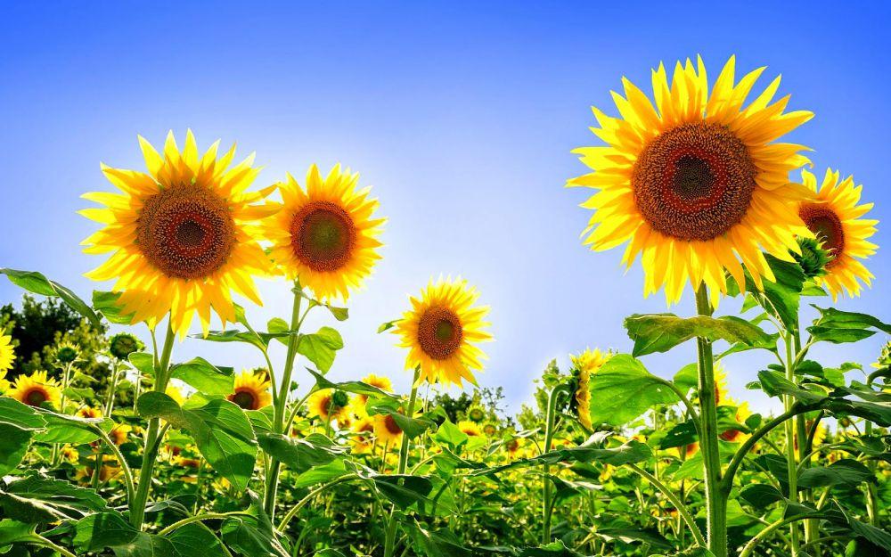 7 Bunga Ini Ternyata Bisa Dijadikan Obat Manjur Nggak Nih