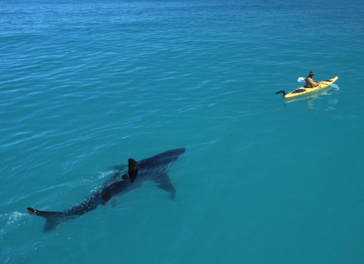 13 Foto ini tunjukkan ada bahaya di balik keindahan lautan, waspada..