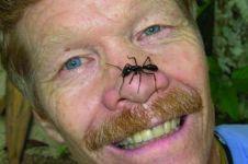 Peneliti buktikan 6 serangga ini paling menyakitkan sengatannya