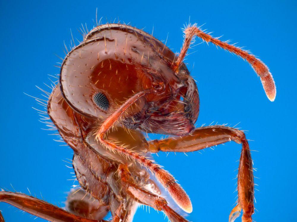 Digigit serangga © 2016 brilio.net