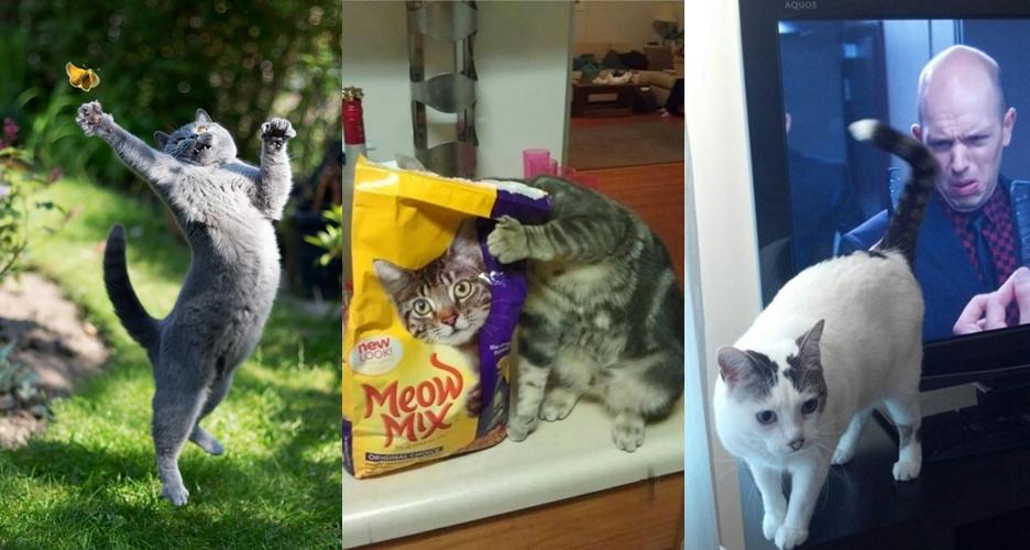 20 Foto pose kucing ini diambil pada waktu yang tepat, tampak keren