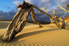 20 Foto terbaik yang diambil di gurun pasir, keren parah & bikin kagum